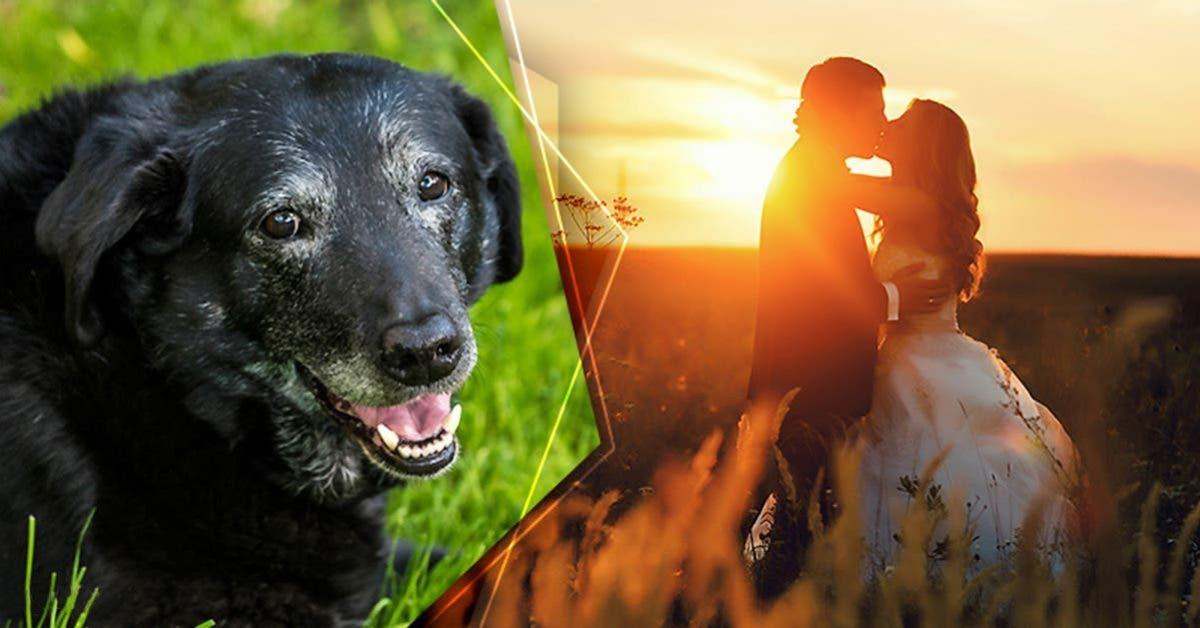 un chien en phase terminale se bat pour vivre pour assister au mariage de sa proprietaire 1