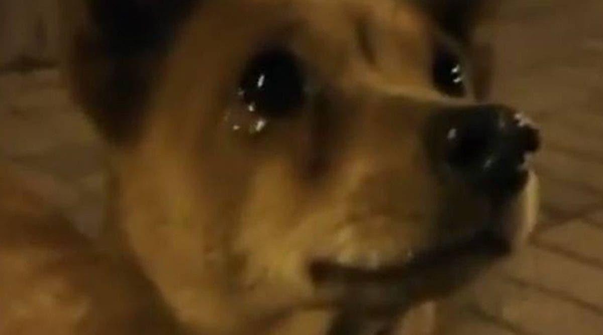 un-chien-errant--pleure--des-larmes-de-joie-apres-quun-gentil-inconnu-lait-nourri-dans-la-rue