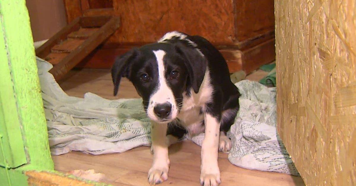 un-couple-adopte-un-chien-dans-un-refuge-animalier-lemmene-a-la-maison-et-le-mange