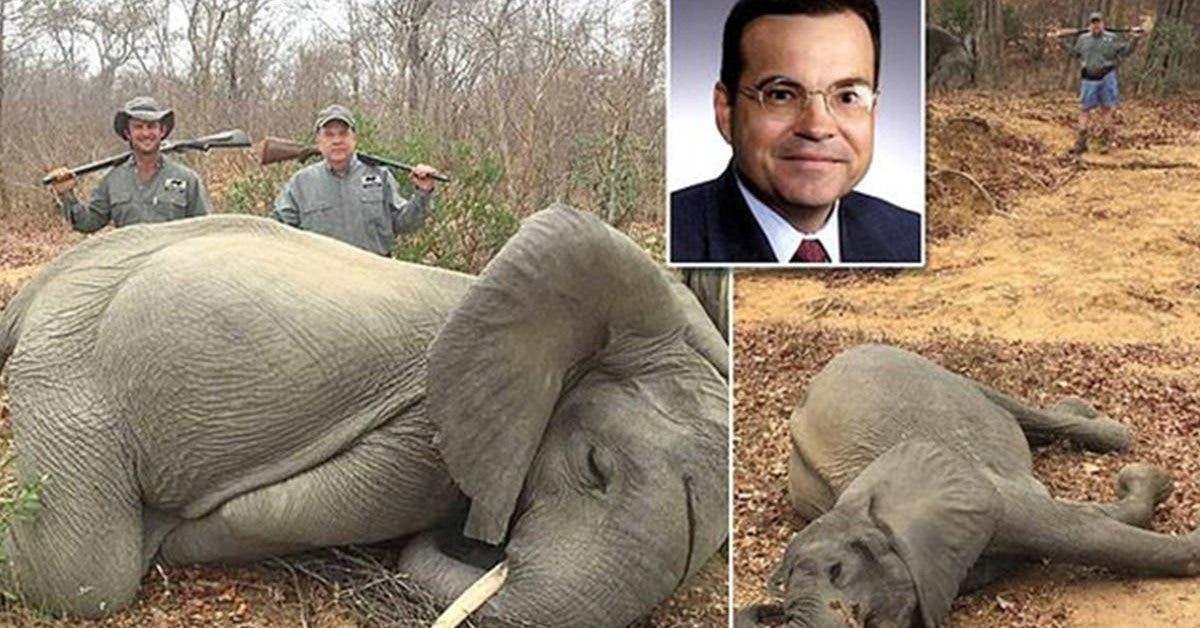un-homme-daffaires-pose-fierement-a-cote-de-bebes-elephants-quil-a-tue-en-afrique-il-pretend-que-cest-de-la-legitime-defense