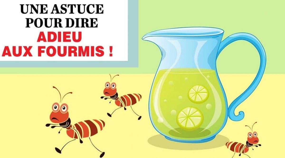 Astuces Naturelles Pour Se Débarrasser Des Fourmis voici comment vous débarrasser des fourmis avec du citron