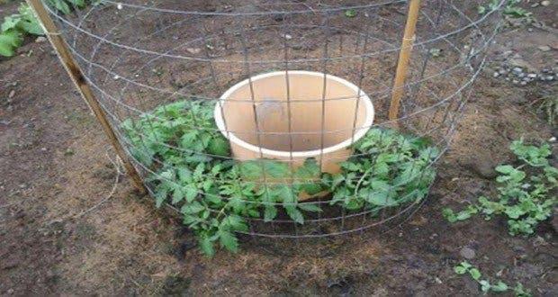 Une id e de g nie pour faire pousser des tomates - Faire pousser tomate cerise ...
