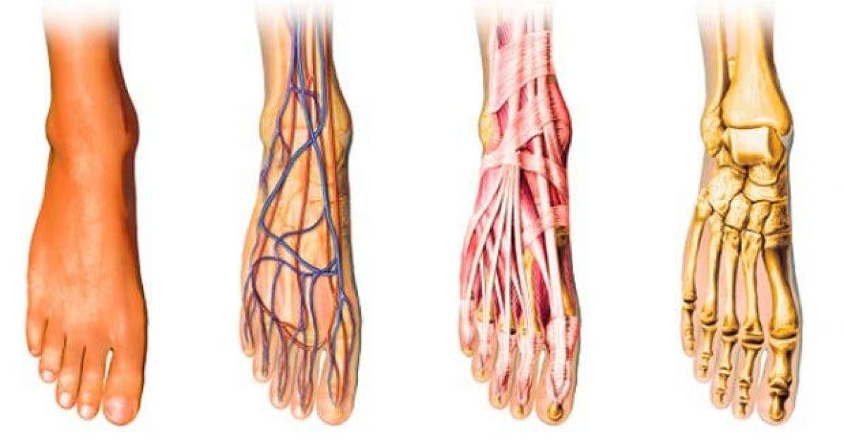 une mauvaise circulation sanguine des pieds et des mains froids voici la solution 1 1