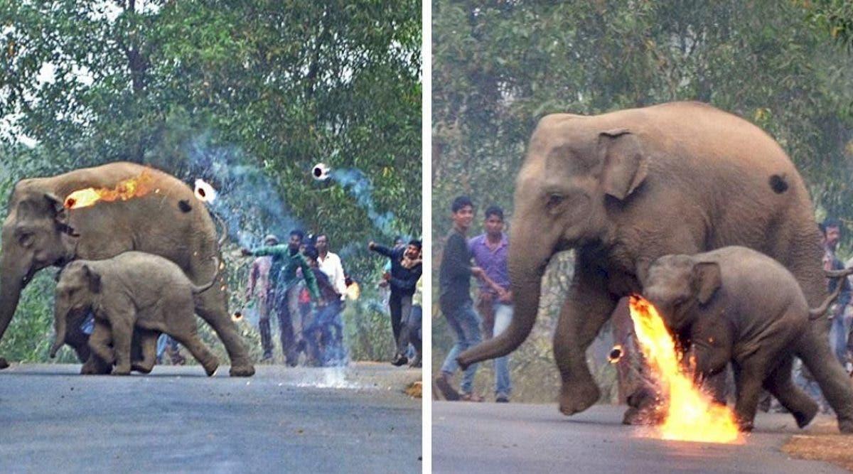 une-mere-elephant-et-son-petit-se-font-attaquer-a-coups-de-cocktail-molotov-alors-quils-fuient-la-deforestation