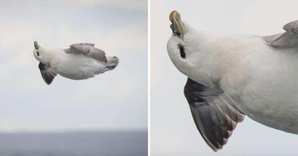 une-photographe-capture-accidentellement-loiseau-le-plus-heureux-et-detendu-du-monde