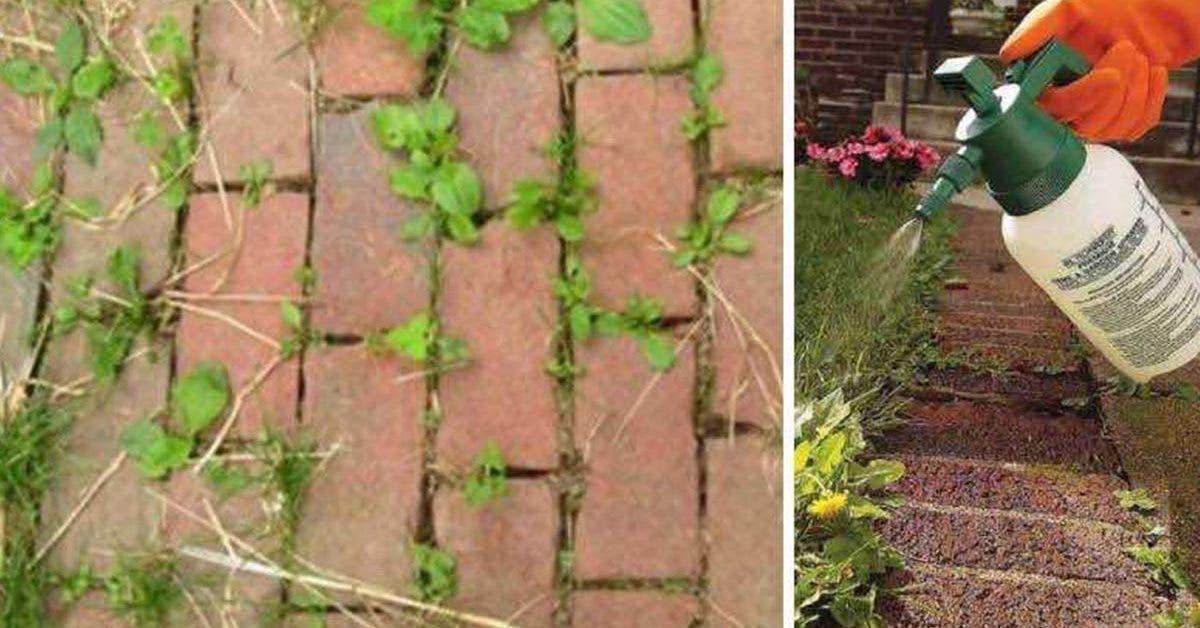 une-vieille-astuce-efficace-pour-eliminer-les-mauvaises-herbes-du-jardin
