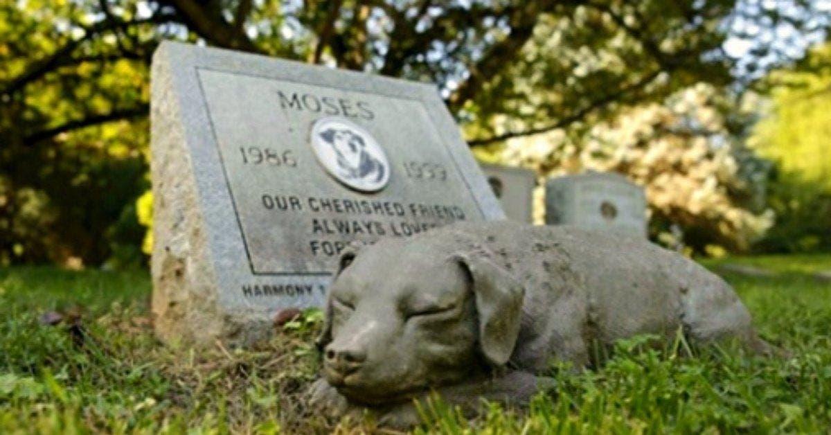 usa une nouvelle loi permet aux animaux de compagnie detre enterres aupres de leurs proprietaires 1 1