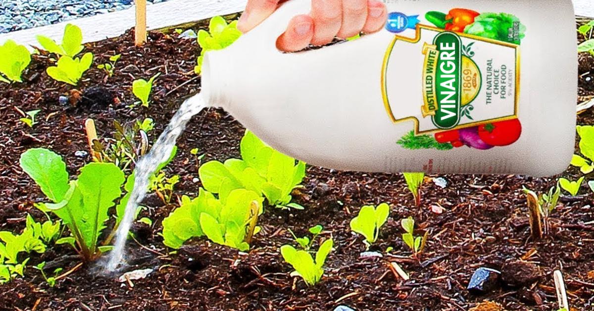 10 utilisations astucieuses du vinaigre blanc pour le Jardin