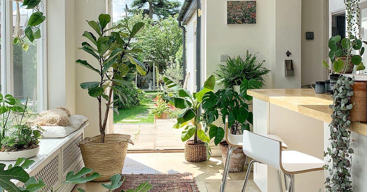 Vivre avec des plantes, c'est bon pour la santé !