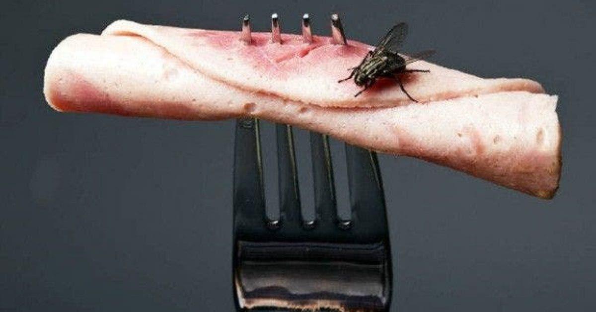 voici ce qui arrive lorsquune mouche atterrit sur votre nourriture 1
