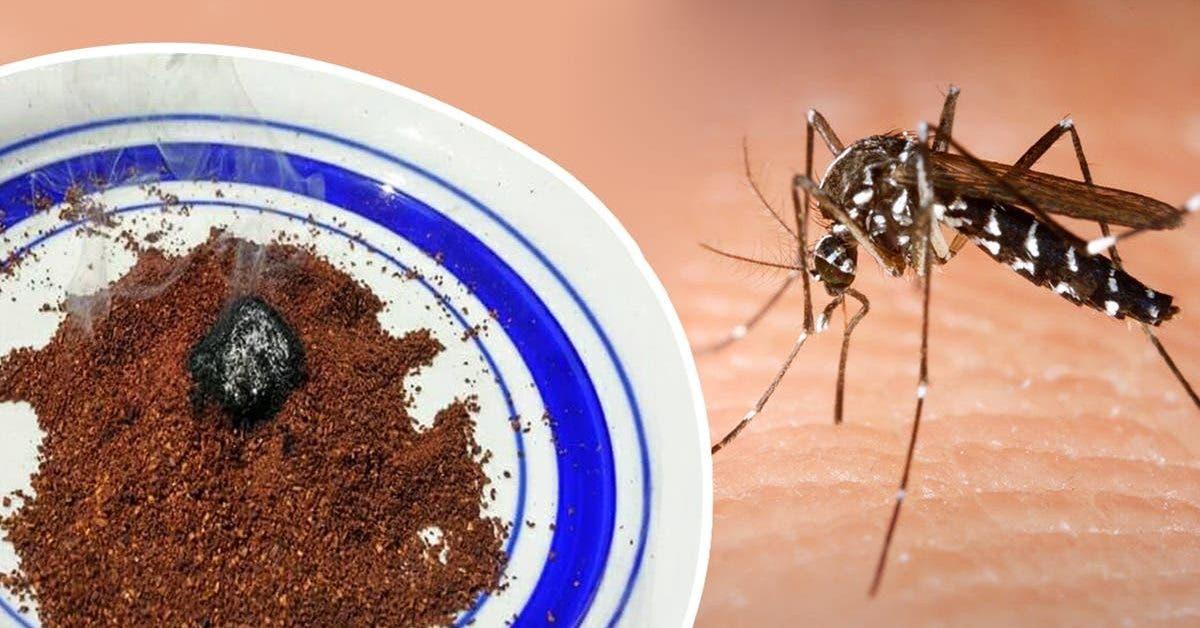 voici-comment-il-faut-utiliser-le-marc-de-cafe-pour-dire-adieu-aux-moustiques