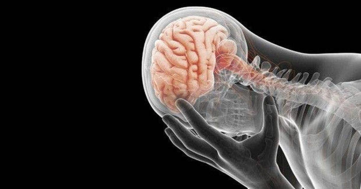 voici comment la depression affecte le fonctionnement du cerveau et de la memoire 1