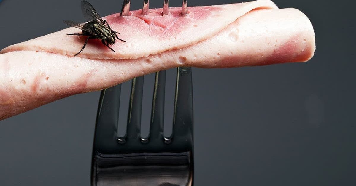 voila-pourquoi-il-ne-faut-pas-consommer-un-aliment-sur-lequel-une-mouche-sest-pose