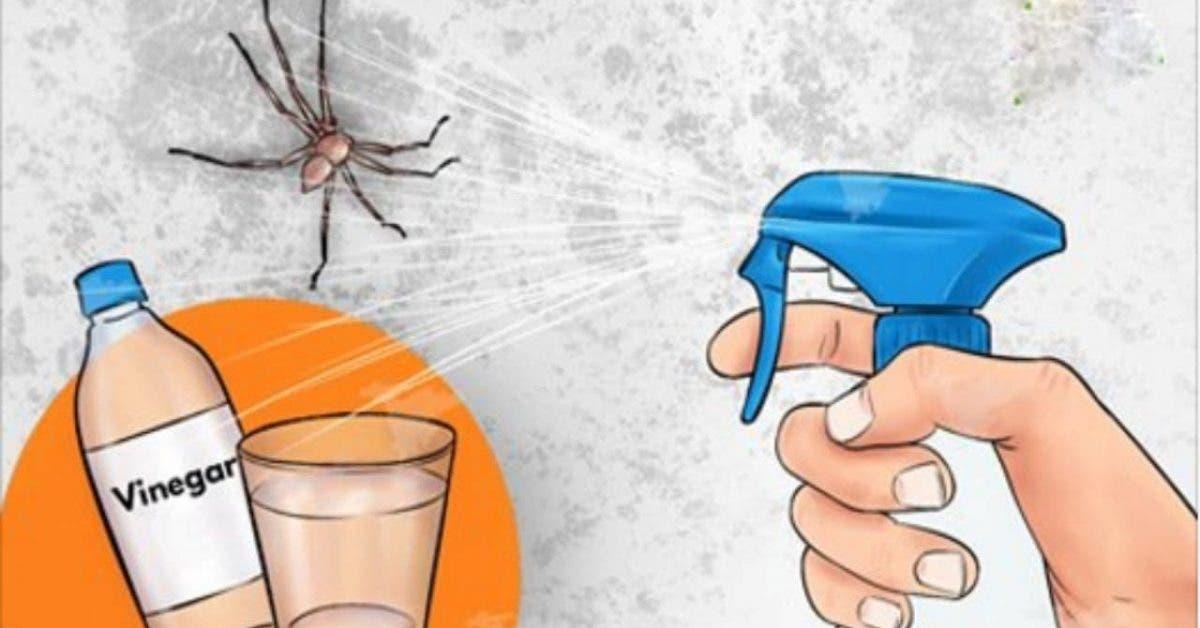 vous ne verrez plus jamais une autre araignée dans votre cuisine, salle de bain ou chambre à coucher